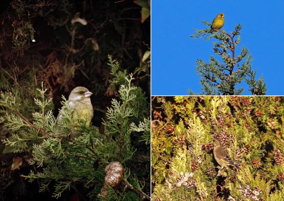Garrigues Basses, hiver, oiseaux,