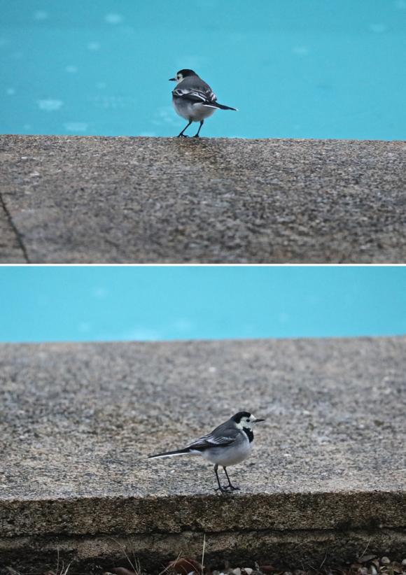 Garrigues Basses, hiver, faune, oiseaux