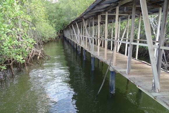 mangrove-5-DSC01094.JPG