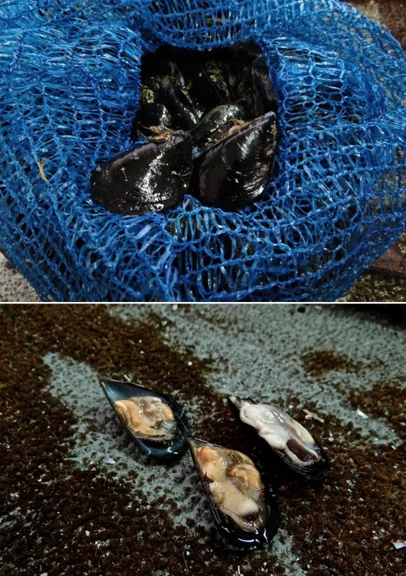 Mer, Moules, huitres, Port-Saint-Louis-du-Rhône