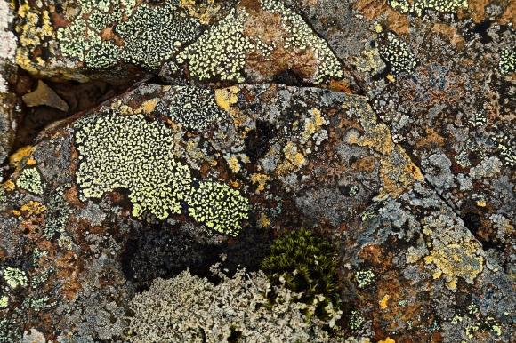 Voyages, Islande, Le Nord, lichens