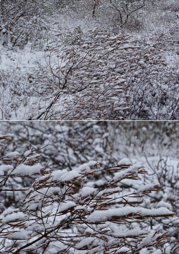 Garrigues Basses,Lédenon,Neige et glace