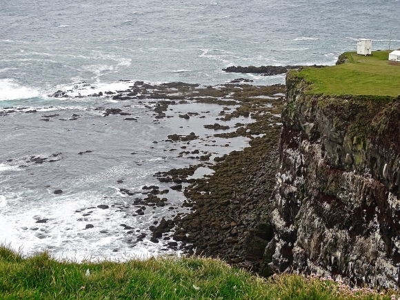 Voyages, islande, Latrabjarg, macareux