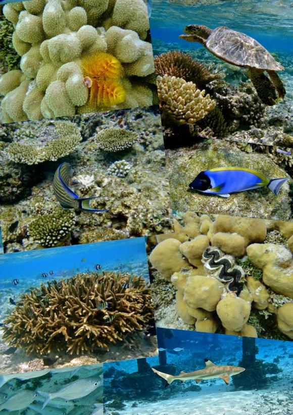 4-La mer-Capture d'écran 2017-12-31 à 18.28.32.png