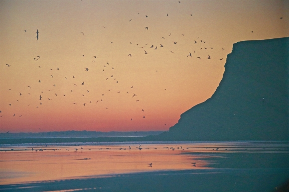 Voyages,islande, Latrabjarg,macareux
