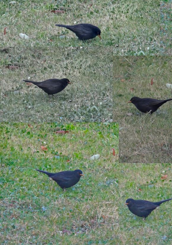garrigues basses,hiver,oiseaux
